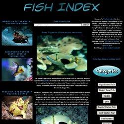 Bursa Triggerfish (Rhinecanthus verrucosus)