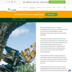 Tree removal, cutting & trimming