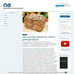 Le Tritordeum : Une nouvelle céréale bio, fruit du génie génétique