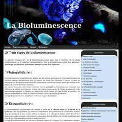 2/ Trois types de bioluminescence