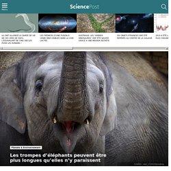 Les trompes d'éléphants peuvent être plus longues qu'elles n'y paraissent