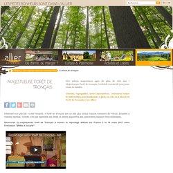 La forêt de Tronçais dans l'Allier : découvrir la forêt de Troncais - Allier Tourisme