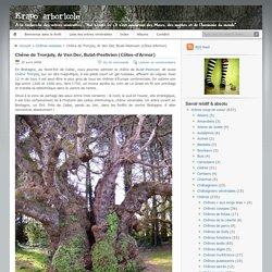 Chêne de Tronjoly, Ar Ven Der, Bulat-Pestivien (Côtes-d'Armor)