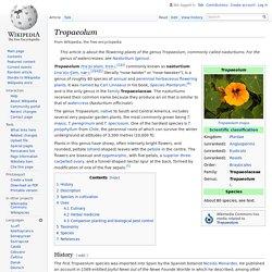 Tropaeolum - Wikipedia