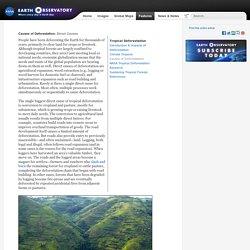 Tropical Deforestation : Feature Articles