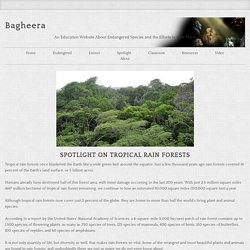 Tropical Rain Forest: an Endangered Species Spotlight Topic