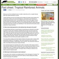 Fact sheet: Tropical Rainforest Animals