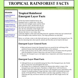 TROPICAL RAINFOREST EMERGENT LAYER FACTS