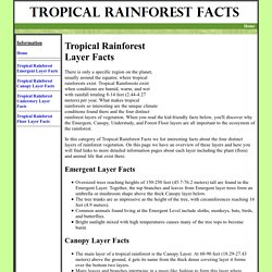 TROPICAL RAINFOREST LAYER FACTS