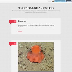 tropical shark's log