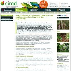 CIRAD - AVRIL 2015 - Forêts tropicales et changement climatique : des modèles pour prévoir l'évolution des peuplements