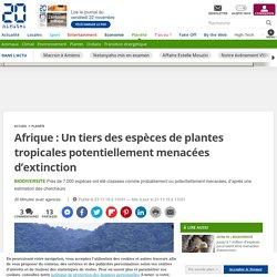 Afrique: Un tiers des espèces de plantes tropicales potentiellement menacées d'extinction