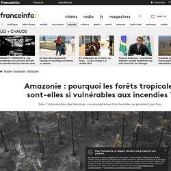 Amazonie : pourquoi les forêts tropicales sont-elles sivulnérables aux incendies ?