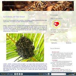 les abeilles de Lifou - les aventures des avettes tropicalisées... Partages d'expériences happycoles, juste pour le plaisir !