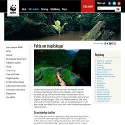 Fakta om tropikskogar