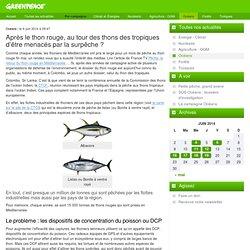 Après le thon rouge, au tour des thons des tropiques d'être menacés par la surpêche ?