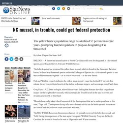 NC mussel, in trouble, could get federal protection - News - Wilmington Star News - Wilmington, NC