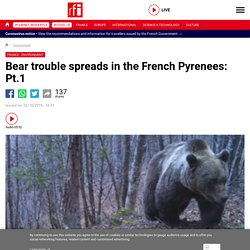 Bear trouble spreads in the French Pyrenees: Pt.1