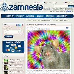 De la DMT trouvée dans la glande pinéale de rats vivants - Zamnesia