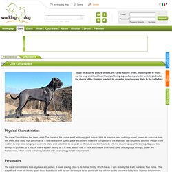 Trova tutto sulla razza Cane Corso Italiano – working-dog