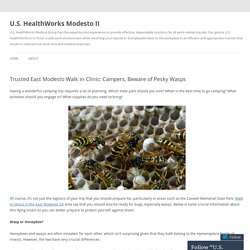 Trusted East Modesto Walk in Clinic: Campers, Beware of Pesky Wasps