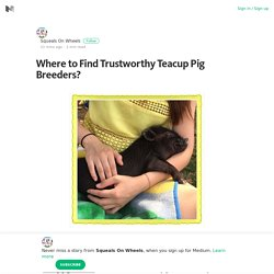 Where to Find Trustworthy Teacup Pig Breeders? – Squeals On Wheels