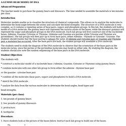 TS DNA ModelingTeacher Section