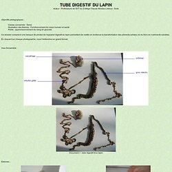 Tube digestif du lapin