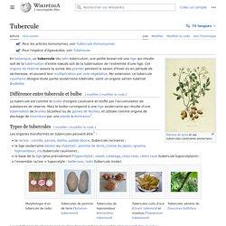 Tubercule