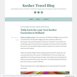 Tulip Facts for your Next Kosher Excursion to Holland