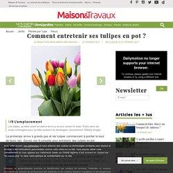 Tulipes en pot : 9 conseils pour les entretenir