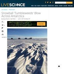 Snowball 'Tumbleweeds' Blow Across Antarctica