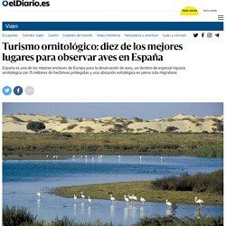 Turismo ornitológico: diez de los mejores lugares para observar aves en España