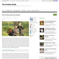 Wild Turkeys Facts and Hunting