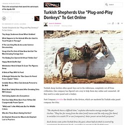 """Turkish Shepherds Use """"Plug-and-Play Donkeys"""" To Get Online"""