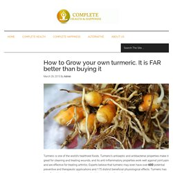 How to Grow your own turmeric. It is FAR better than buying it