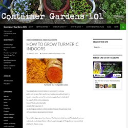 How to Grow Turmeric Indoors