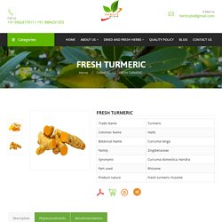 Fresh Turmeric Suppliers