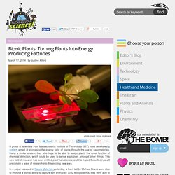 Bionic Plants: Turning Plants Into Energy Producing Factories