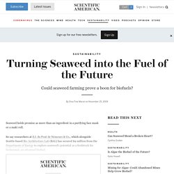 Turning Seaweed into the Fuel of the Future