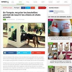 En Turquie, recycler les bouteilles permet de nourrir les chiens et chats errants
