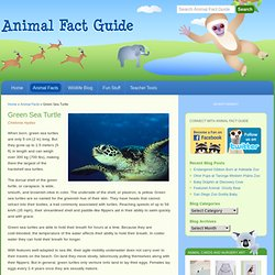 Green Sea Turtle Facts for Kids