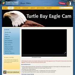 Eagle Cam: Turtle Bay Exploration Park: Human. Nature.