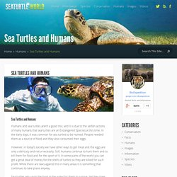 Sea Turtles and Humans - Sea Turtle Facts and Information