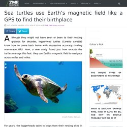 Sea turtles use Earth's magnetic field like a GPS to find their birthplace