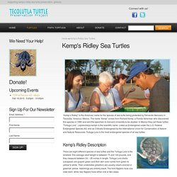 Tecolutla Turtle Preservation Project