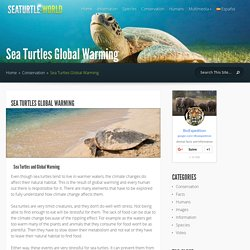 Sea Turtles Global Warming - Sea Turtle Facts and Information