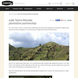 Lake Tutira Manuka plantation partnership