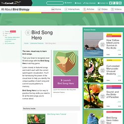 Bird Song Hero Tutorial
