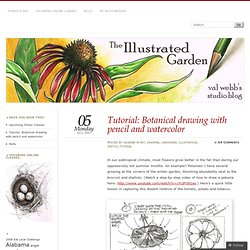 Tutorial: Botanical drawing with pencil and watercolor «
